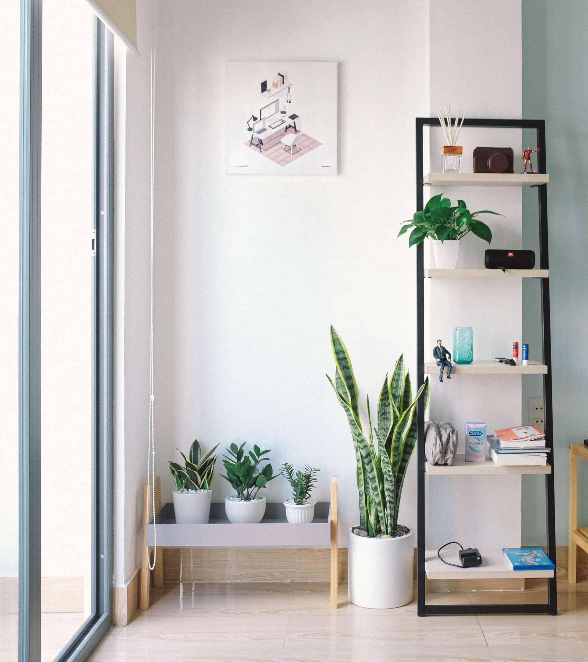Indoor plants in book shelves
